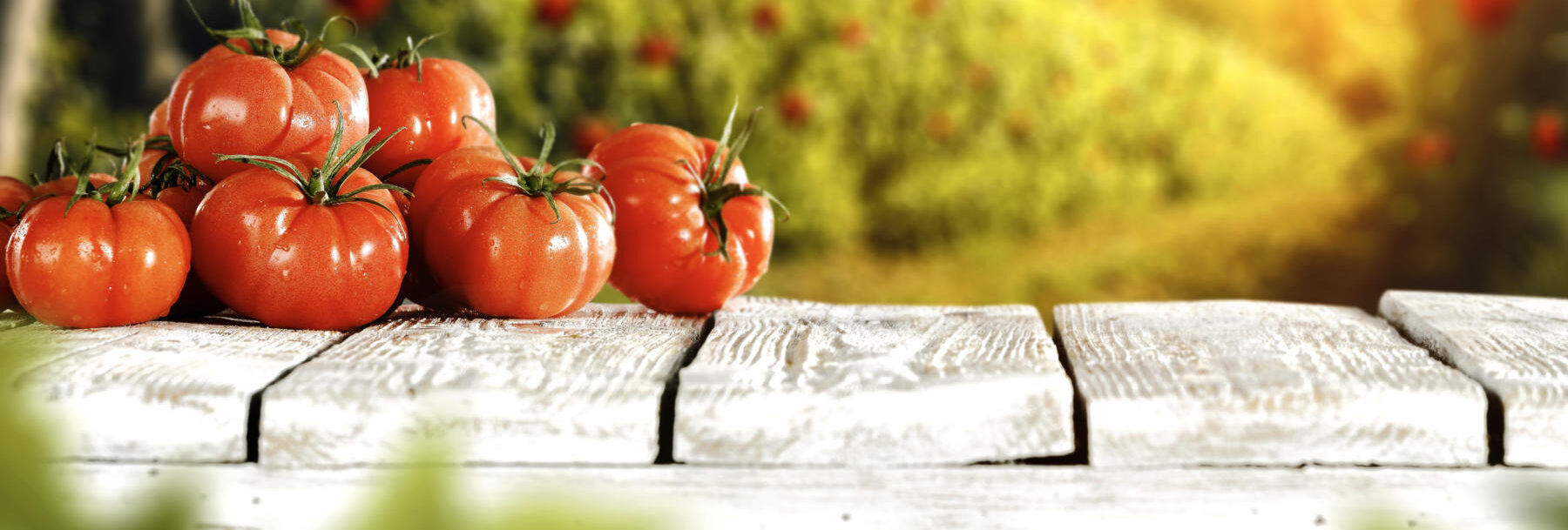 Welcome to Nicolaï Fruit - Quality fruit and vegetables in